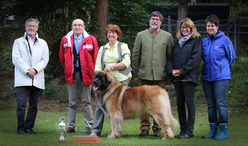 Sully BIS Leonberg 2015 with judges
