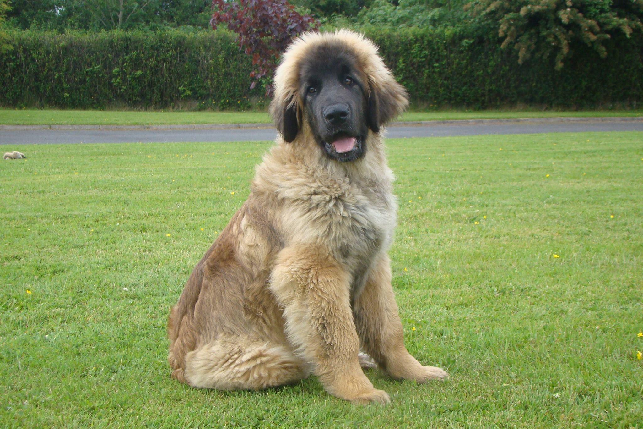 Baloo 5 months
