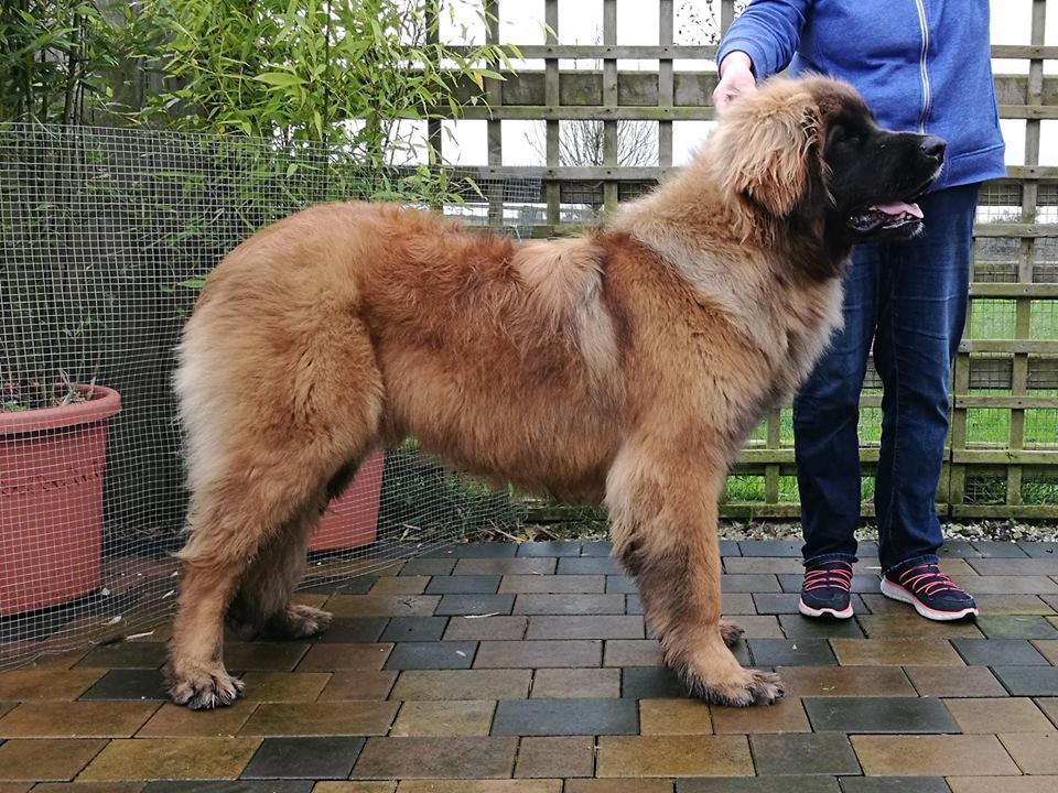 Baloo 9 months
