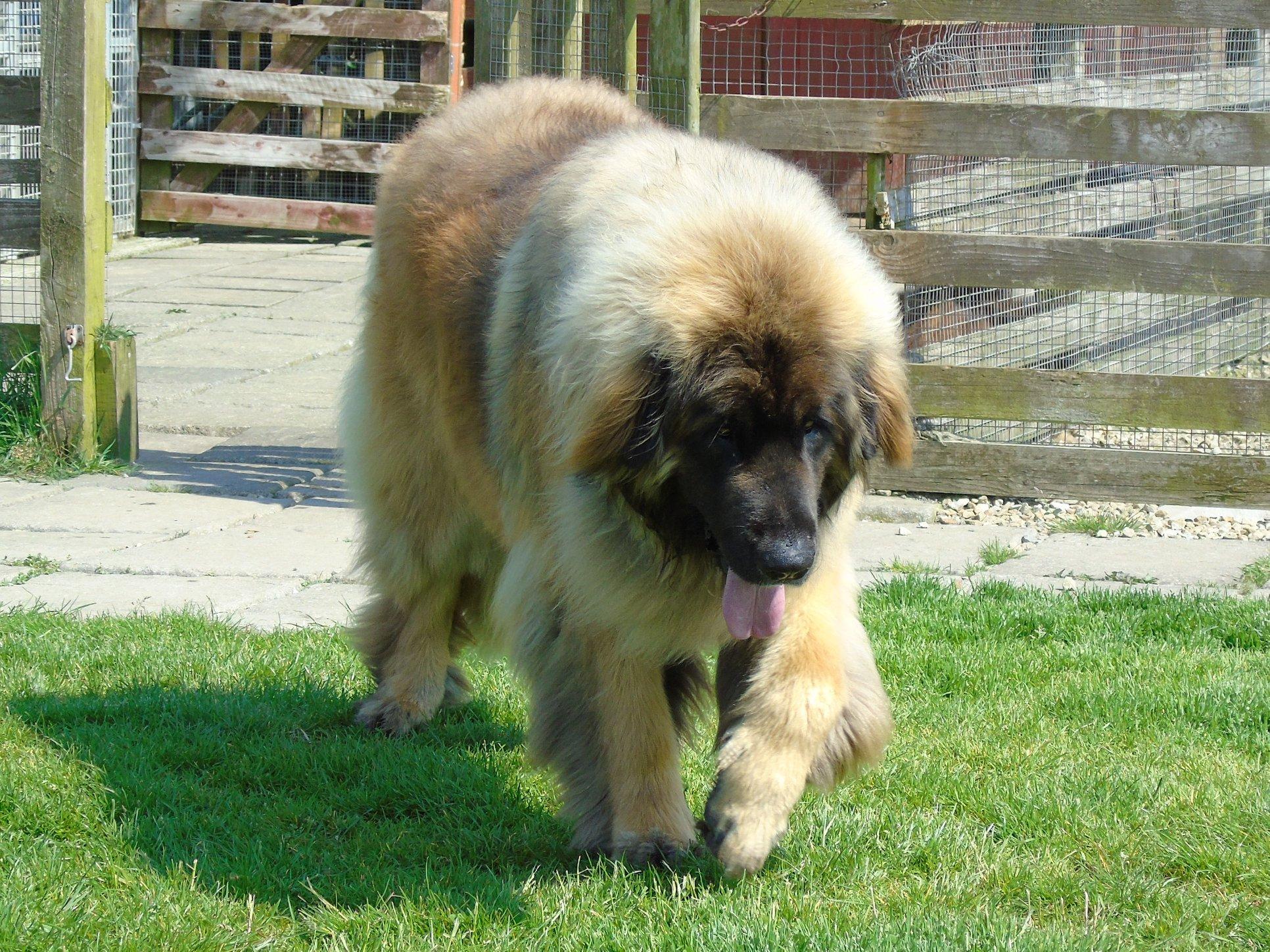 Baloo may 18 2