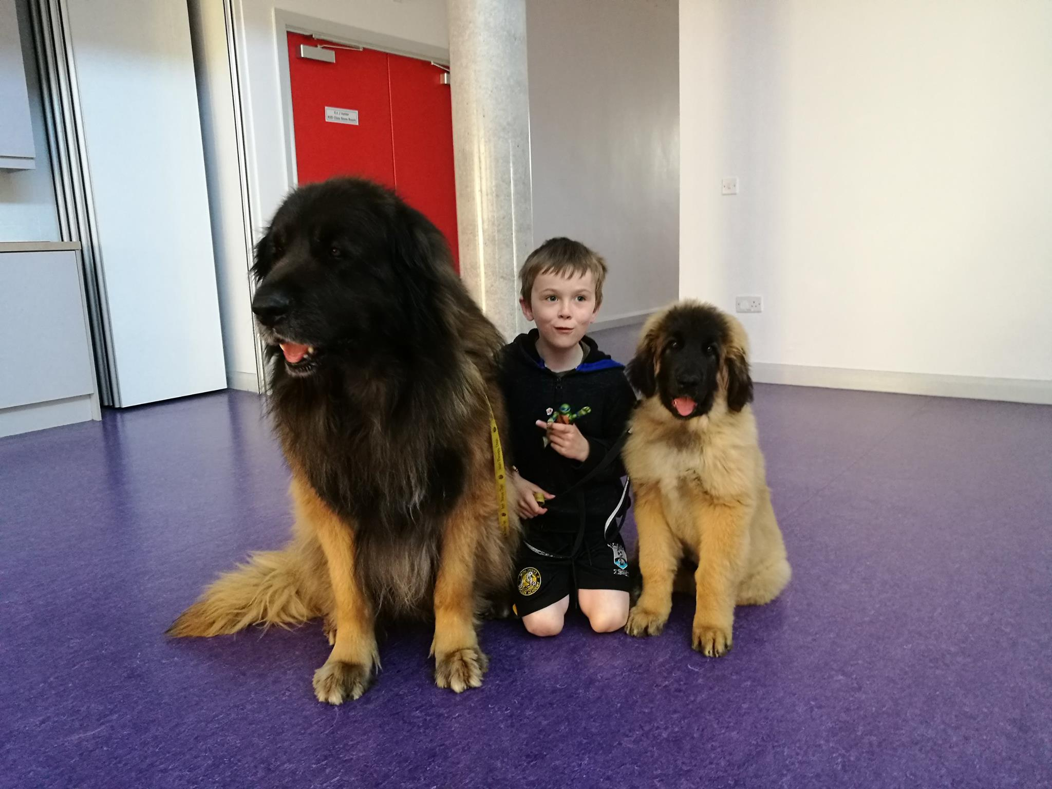 Tassu with Baloo at school