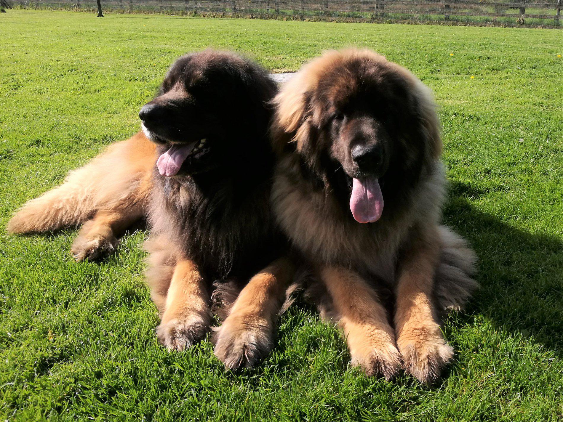 Tassu and son Baloo enjoying the sun