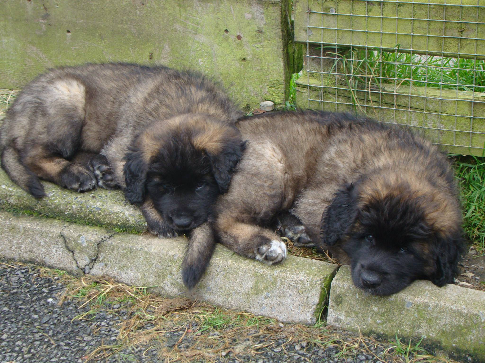 Puppy 7
