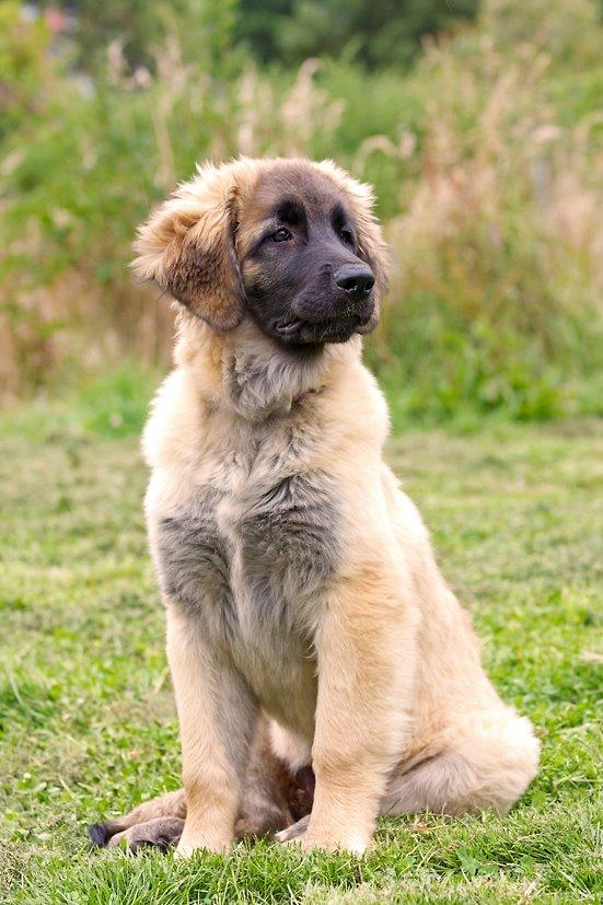 puppy 23