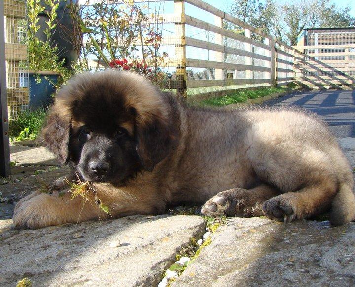 puppy 25