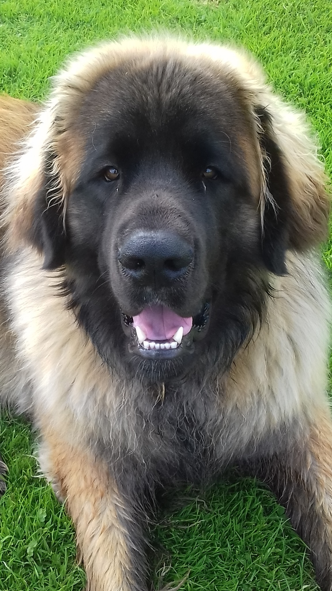 Bertie 9 months