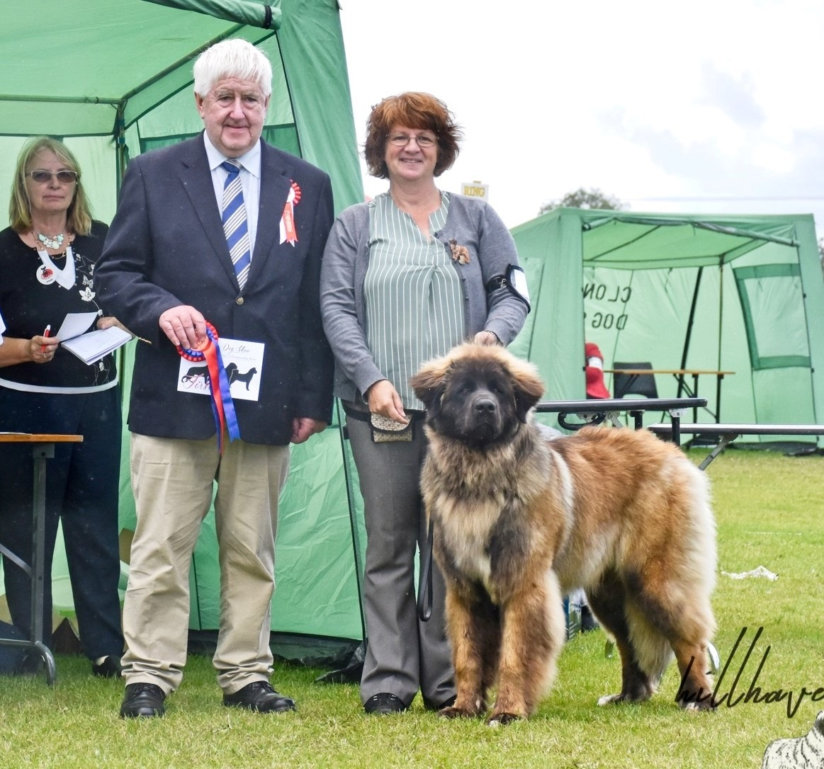 Kobo Best puppy leonberger club show 2019