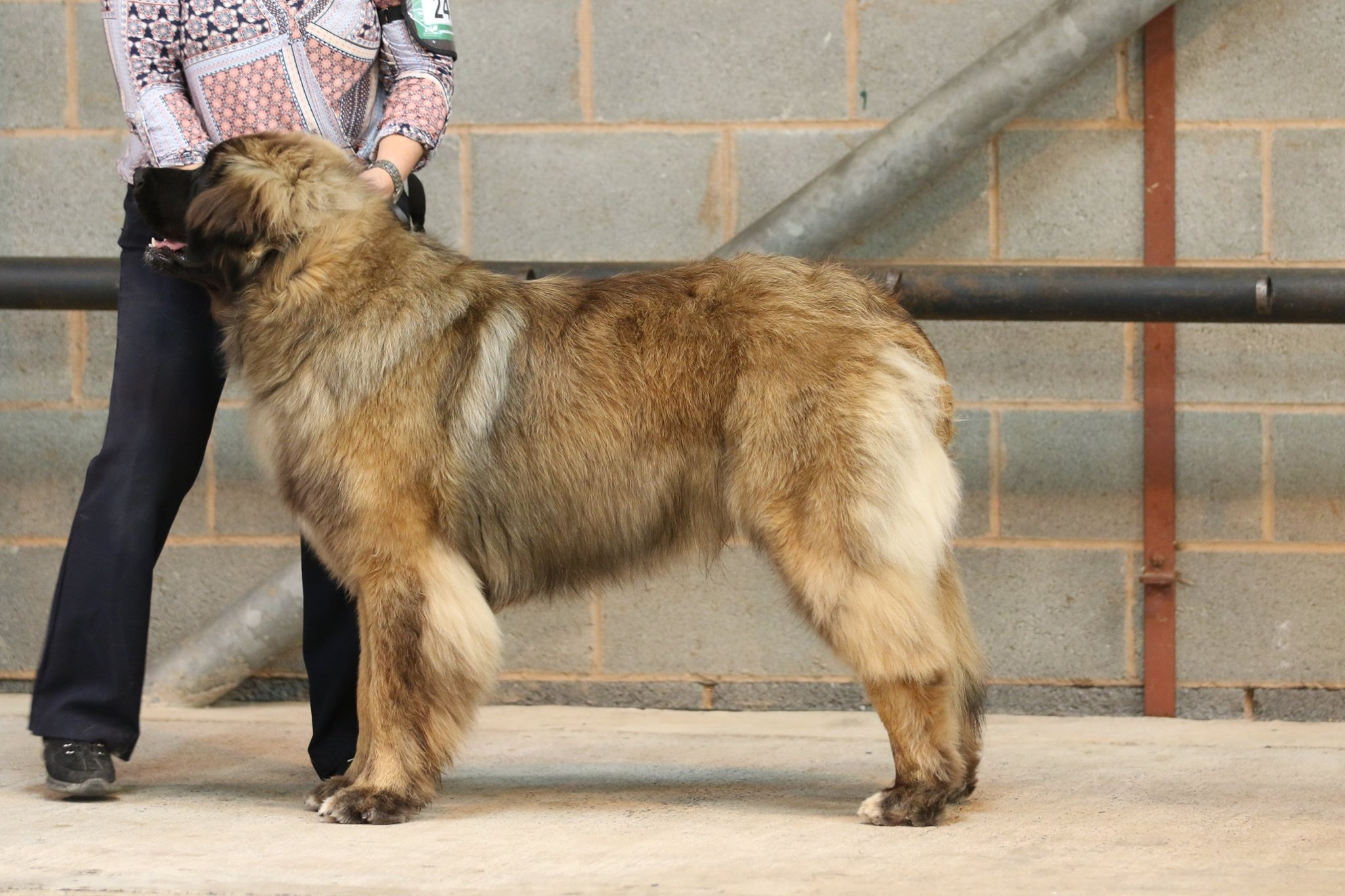 Kobo SWKA Best male puppy in breed