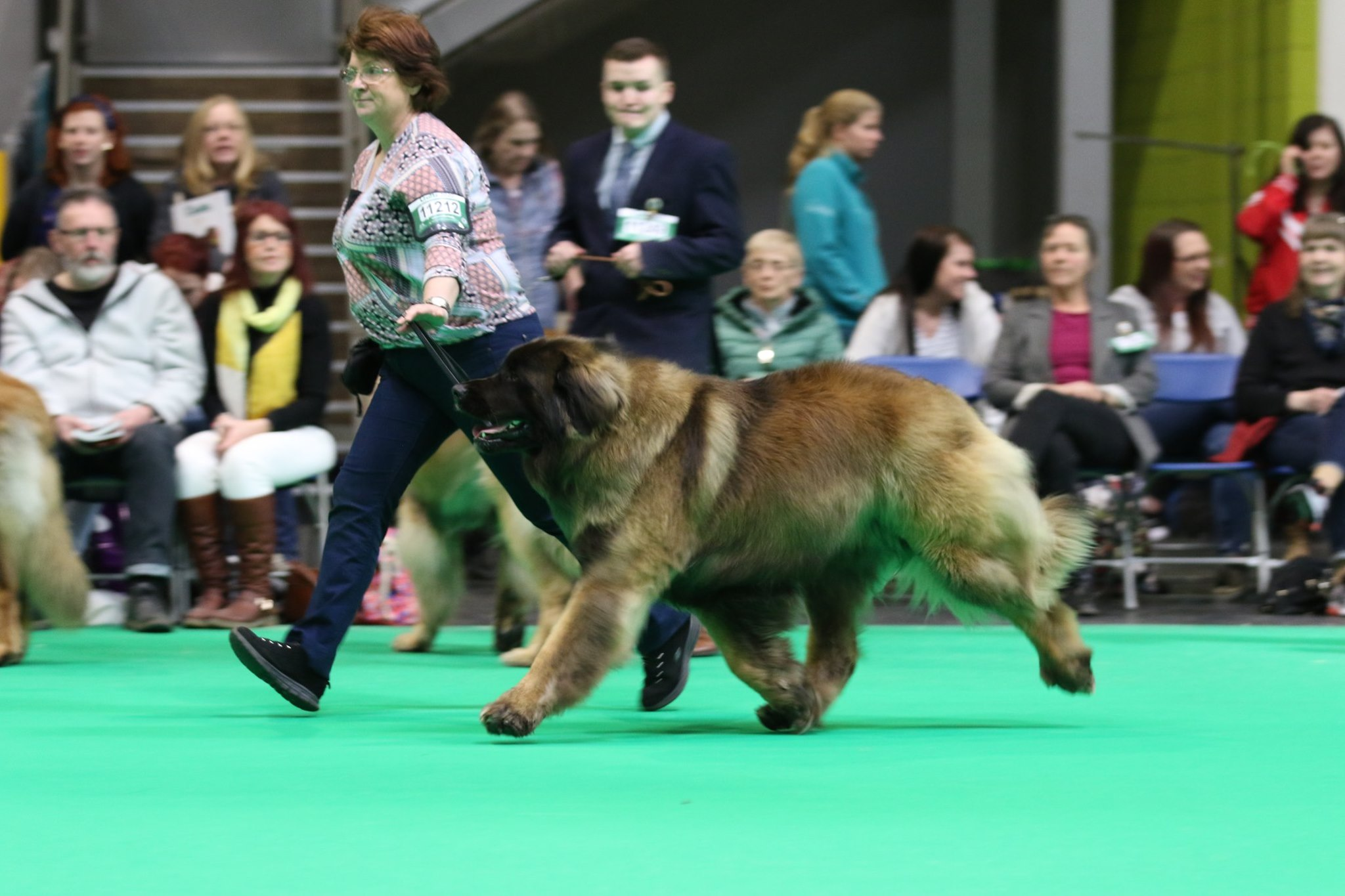 Kobo running Crufts