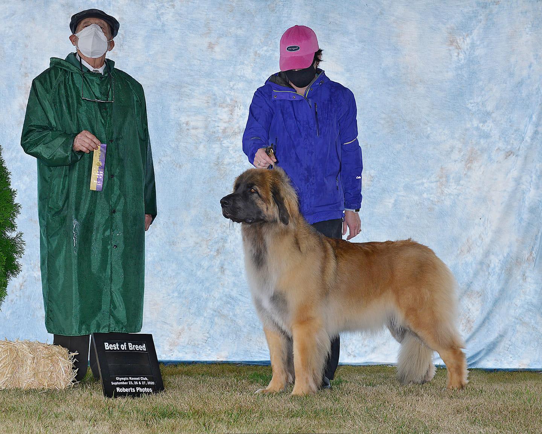 Faith BOB Olypic Kennel Club 2020